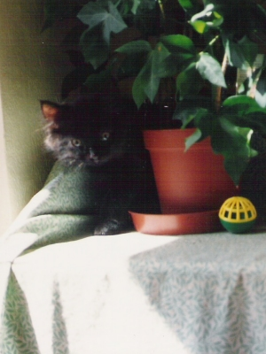 cleo as a kitten hiding behing a plant pot