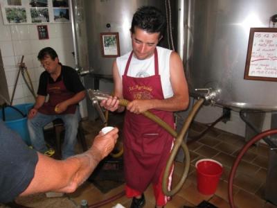 tasting the prinitivo wine