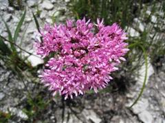 Ferkloof flower 1