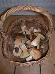basketful of mushrooms