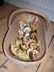 trug of mushrooms