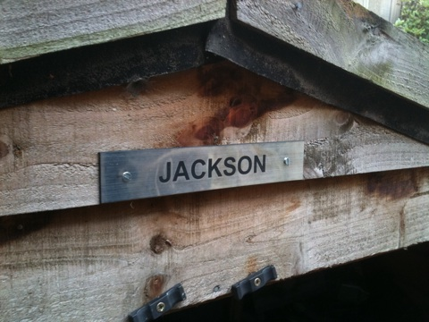 Shed label: Jackson