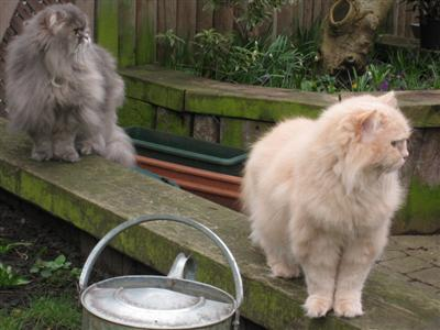 cats in the garden 01