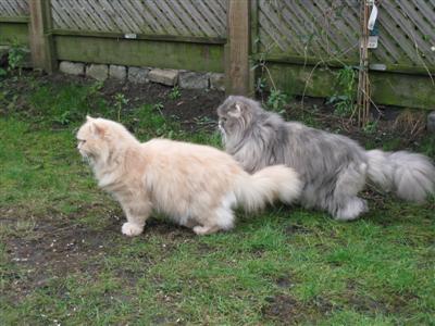 cats in the garden 02