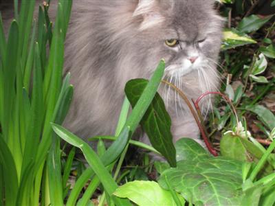 cats in the garden 03