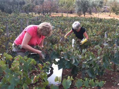 Harvest Mary, Anthea