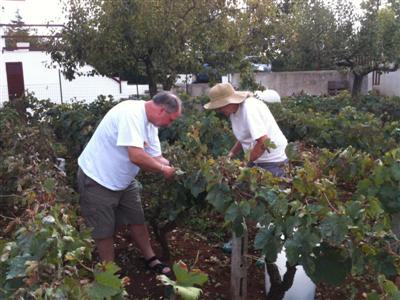 Harvest Alan, Andrea