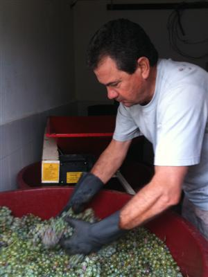 Harvest Tonino