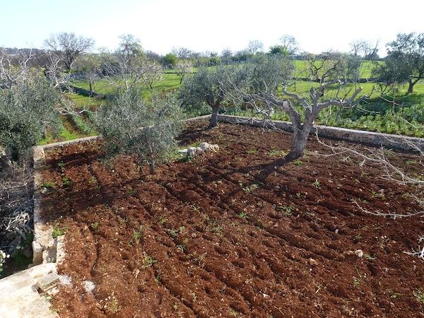 Trullo Azzurro - garden rotovated