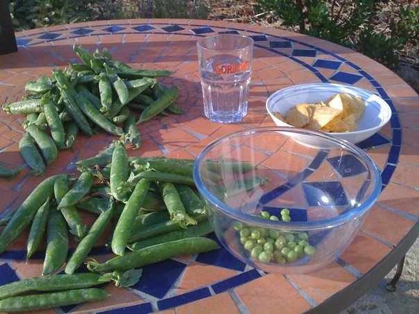 Shelling Puglian peas with the aid of crisps and a gin & tonic