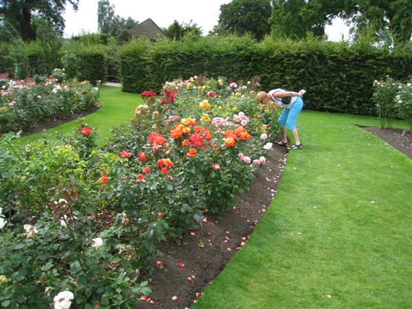 RHS Wisley: smelling roses