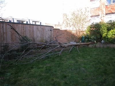 fallen tree in mark and mary's garden