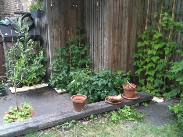 Urban gardening - 03
