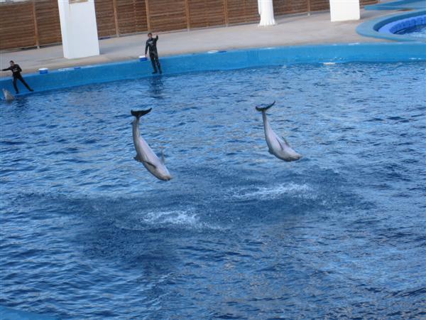 valencia - dolphinarium